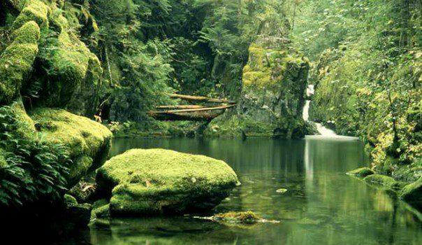 Still Forest Pool